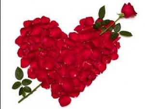 roses anniversary